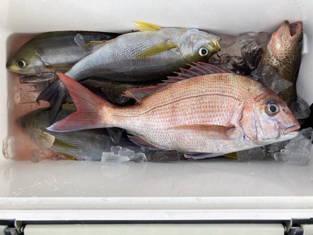 釣果 イサキの他 マダイ37cm