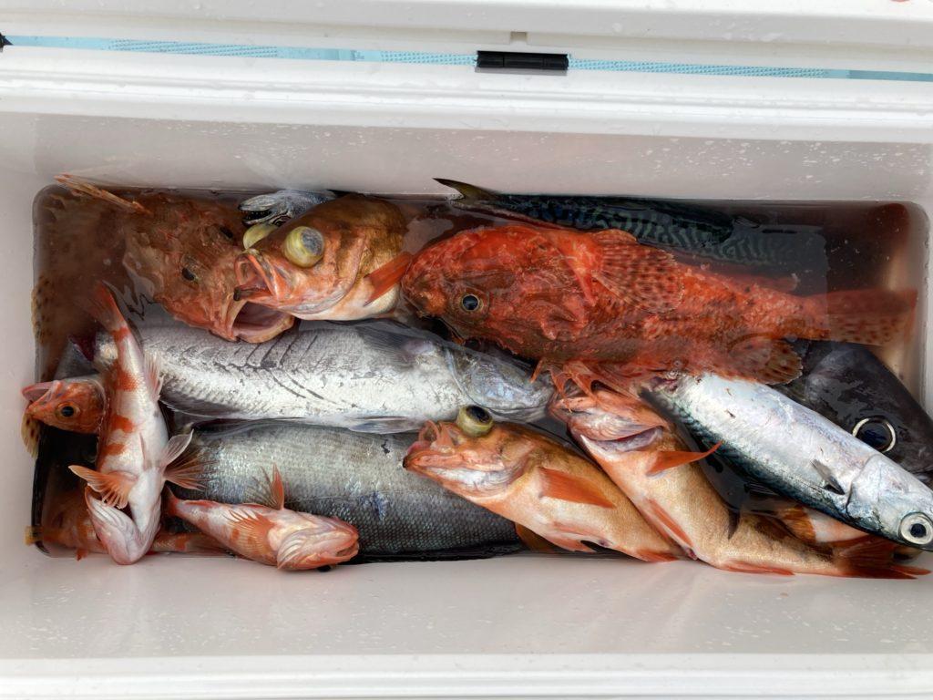 釣果 いろいろ釣れました メダイ 沖メバル オニカサゴ ユメカサゴ サバ