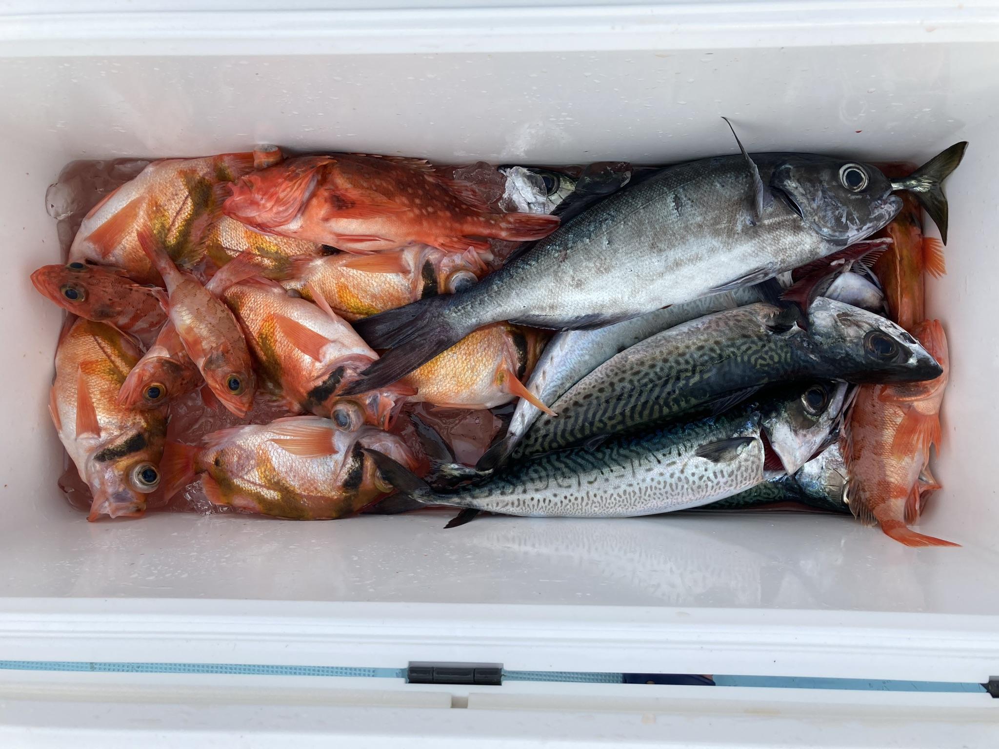 中深場根魚五目 釣果 コントラスト