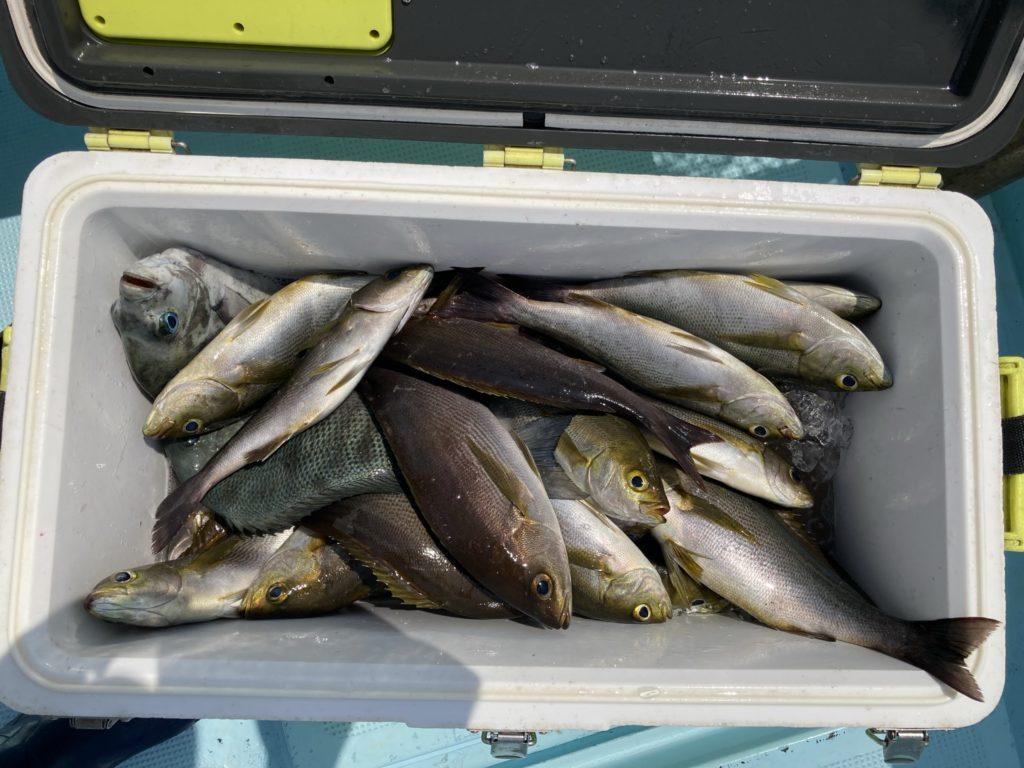 釣果 イサキ メジナ混じる