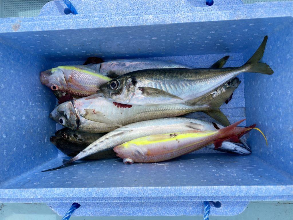 いろいろ釣れました 良型マアジが目立ちますね サバ イトヨリ