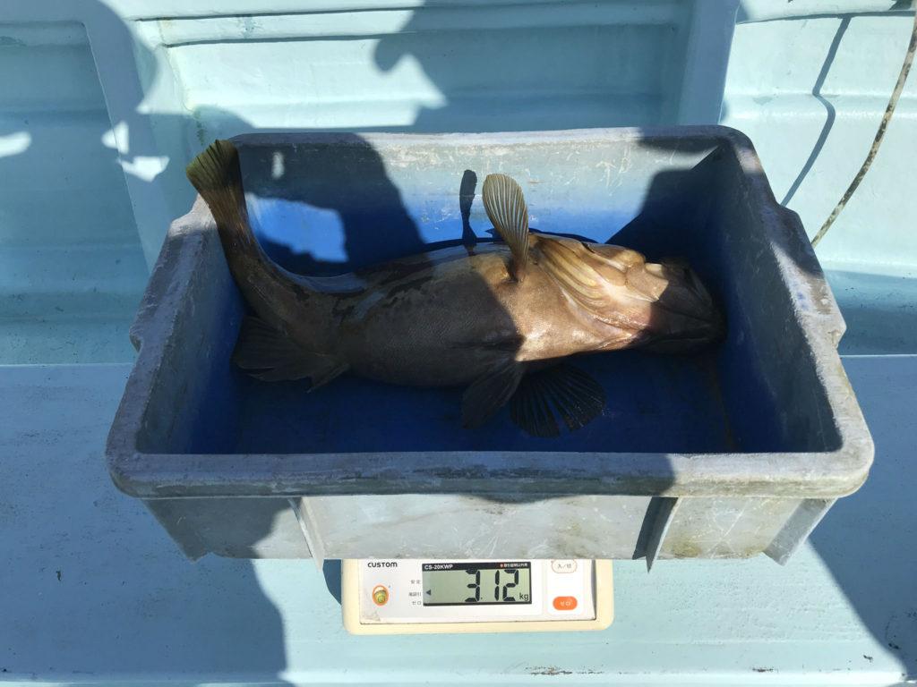 ホウキハタ 3.1kg